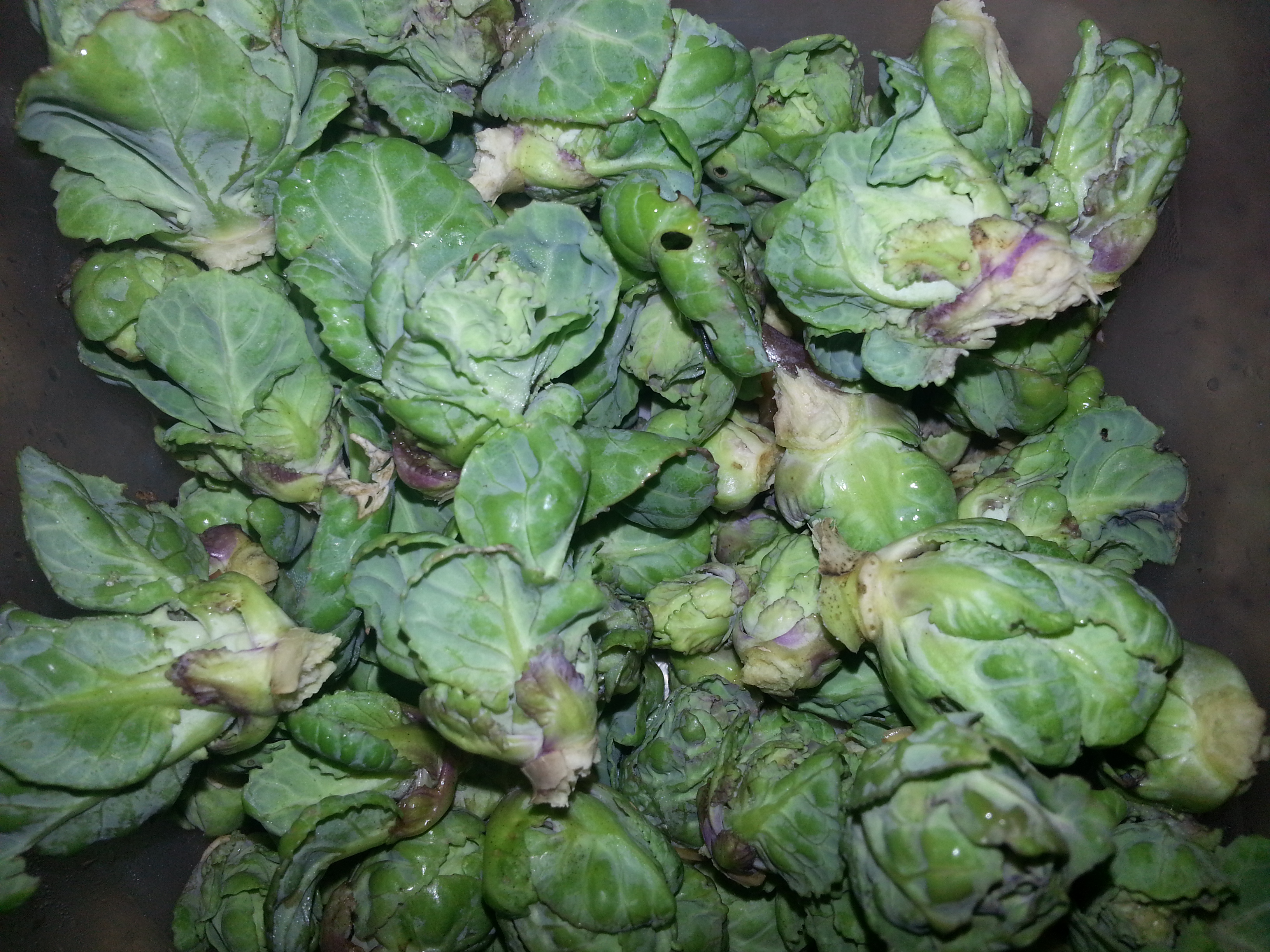 Exceptional Storing Brussel Sprouts Part - 4: Exceptional Storing Brussel Sprouts Photo Gallery