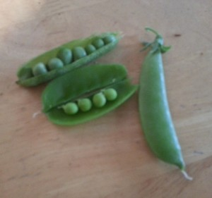 English Peas on the top and Sugar Snap Peas below