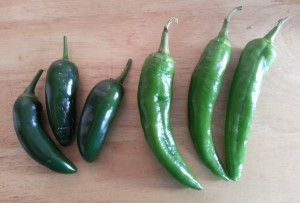 Jalapeno and Anaheim Green Chile Peppers