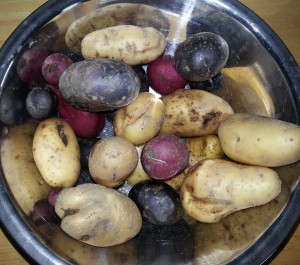 The Rest of My Potato Harvest