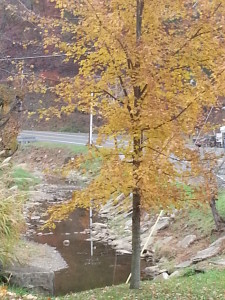 Ate by the Creek in Moundsville