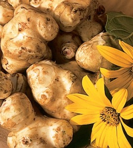 Photo of Jerusalem Artichoke Tubers and Flowers from Johnny's Selected Seeds