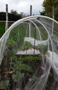 Netting Over Hoop Tunnels